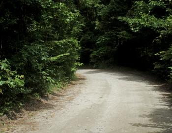 Old Nags Head Woods Road is perfect for a fat tire bike ride.