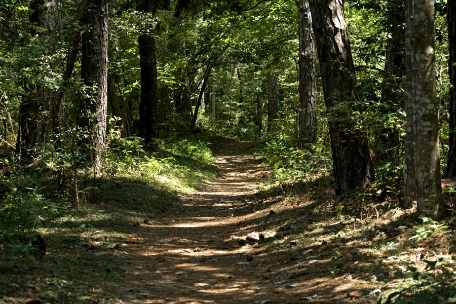 Sweet Gum Swamp Trail in Nags Head Woods.